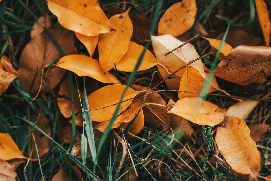 Jesienna sesja w Łysy Młyn lysy mlyn sesja slubna 012